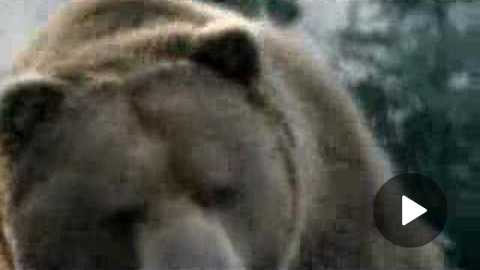 Bud Light Commercial: Bear (from superbowl)