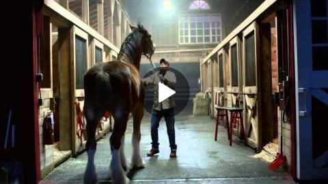Budweiser Lost Dog Super Bowl Commercial
