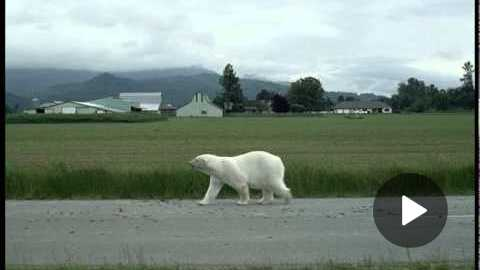Nissan LEAF: Polar Bear