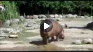 Funny Animal Farts Compilation.