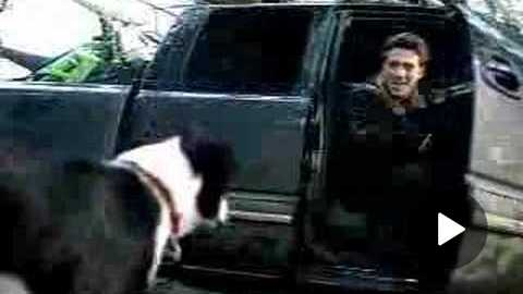 MasterCard Lost Dog